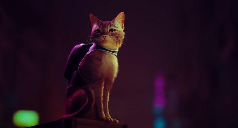 Stray - кошка